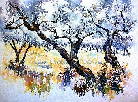 Olive grove - Assisi by Thomas Habermann