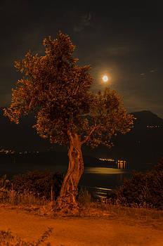 Olive Tree under Moonlight by Jeffrey Teeselink