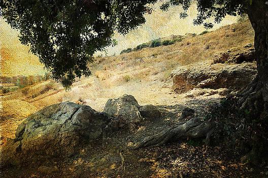 Jenny Rainbow - Olive Tree on the Malaga Hills 1