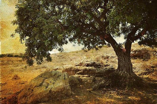 Jenny Rainbow - Olive Tree on the Malaga Hills 2