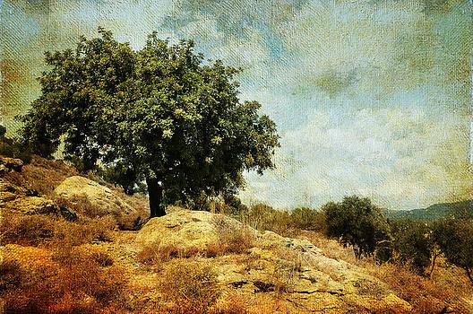 Jenny Rainbow - Olive Tree on the Malaga Hills 3