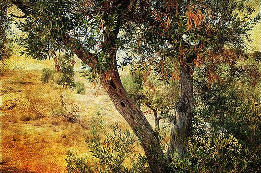 Jenny Rainbow - Olive Tree on the Malaga Hills 4