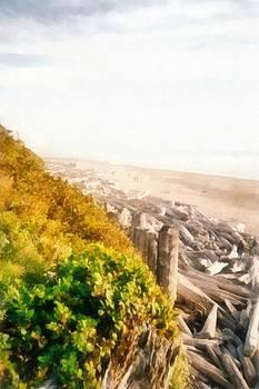 Michelle Calkins - Olympic Peninsula Driftwood