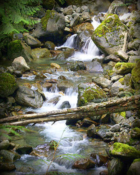 Marty Koch - Olympic Range Stream