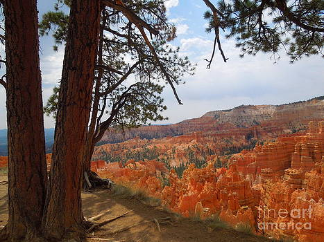 On The Edge of Bryce Canyon by Donna Jackson
