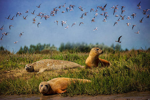 Chris Lord - On The Estuary