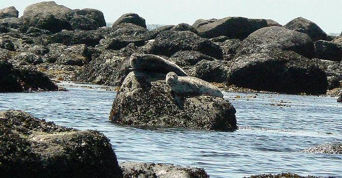 Tia Marie McDermid - On the Rocks