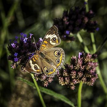 On The Wings of a Butterfly by Edward Khutoretskiy