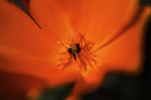 Gilbert Artiaga - One Golden Poppy