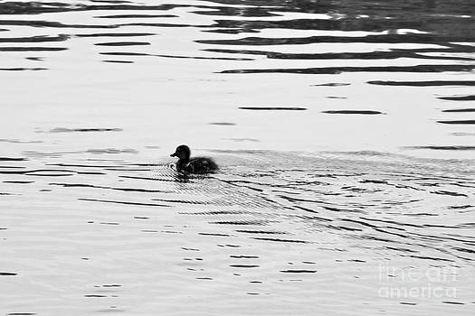 One Little Ducky by Jay Nodianos