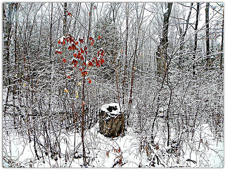 One Lone Log by Dianne  Lacourciere