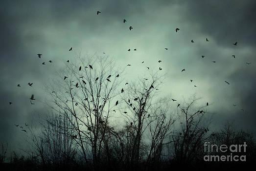 One November Night by Sharon Coty