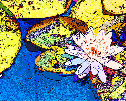 One Pond Lily Blossom by Bruce Tubman