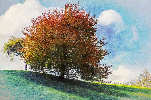 One Tree Hill by Vjekoslav Antic