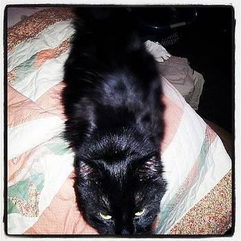 Onyx Acting Like His Demon Self.... <3 by Holley Jacobs