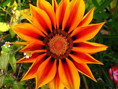 Orange And Yellow Flower by Fabian Cardon