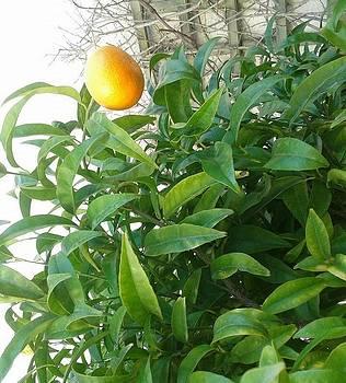 Orange by Andreea Alecu