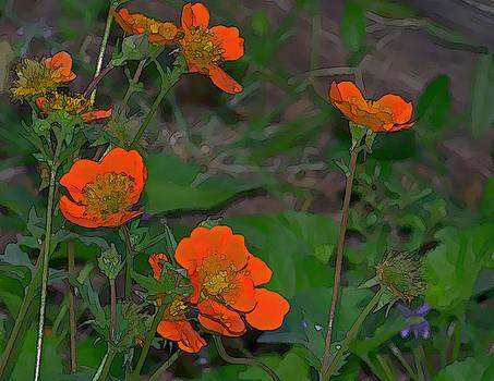 Orange Beauties by Julie Grace