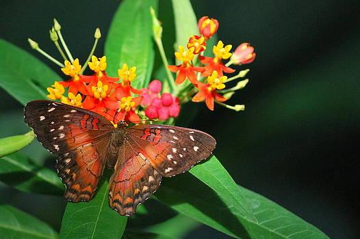 Orange Beauty by Amee Stadler
