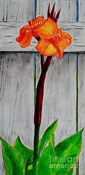 Orange Canna Lily by Melvin Turner