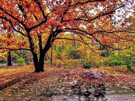 Orange Canopy by Mark Cranston