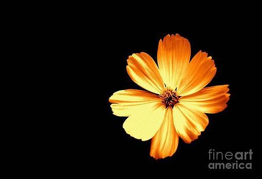 Orange Cream Floral by Alex Blaha