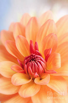 LHJB Photography - Orange Dahlia Blooming