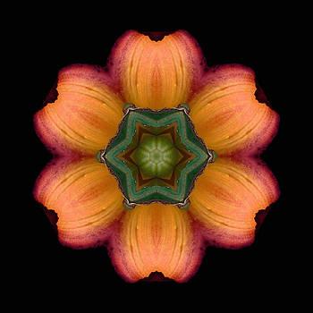 Orange Daylily Flower Mandala by David J Bookbinder