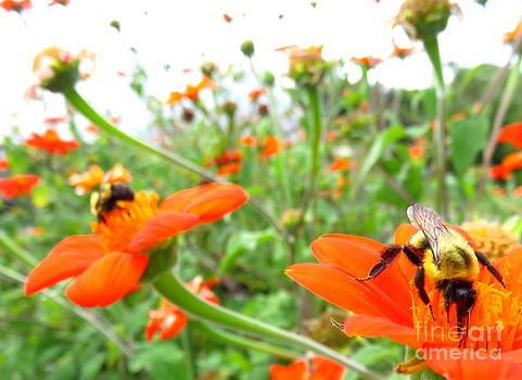 Orange Field by Maria Scarfone