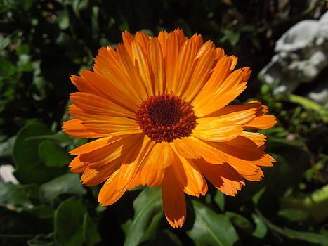 Orange Flower in the Garden by Donna Jackson
