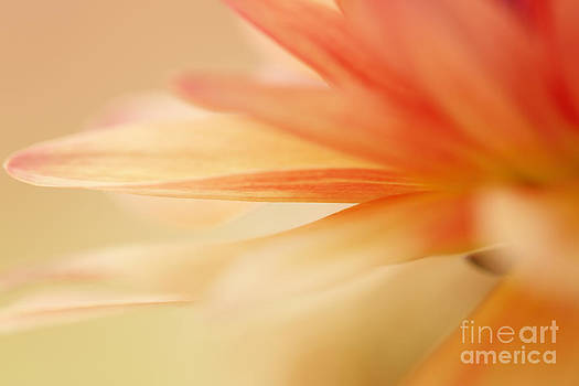 LHJB Photography - Orange flower petal abstract