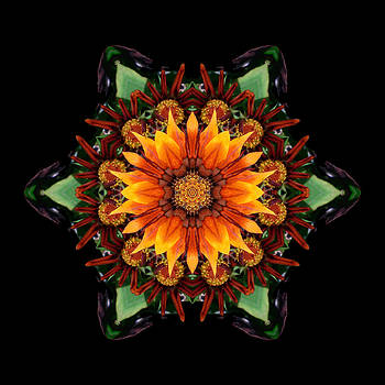 Orange Gazania III Flower Mandala by David J Bookbinder
