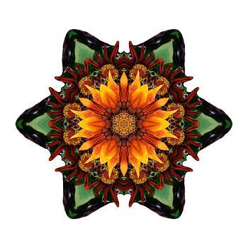 Orange Gazania III Flower Mandala White by David J Bookbinder