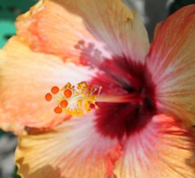 Orange by Heather Ann Myers