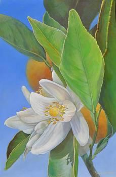 Orange Naissante by Muriel Dolemieux