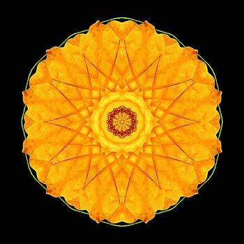 Orange Nasturtium Flower Mandala by David J Bookbinder