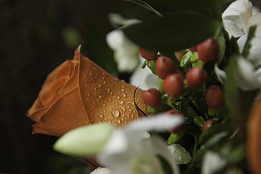 Orange Rose by Lesley Rigg