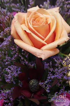 Tannis  Baldwin - Orange Rose
