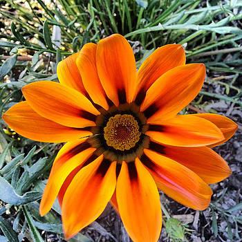 Orange by Saifon Anaya