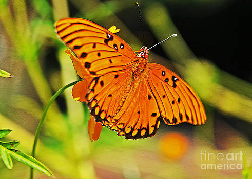 Orange You Gonna Fly Away by Lydia Holly