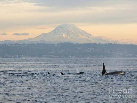 Orcas and Mt. Rainier II by Gayle Swigart