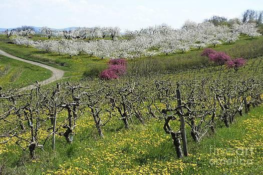 BERNARD JAUBERT - Orchard in France