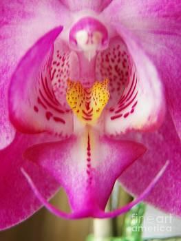 Judy Via-Wolff - Orchid Angel 3