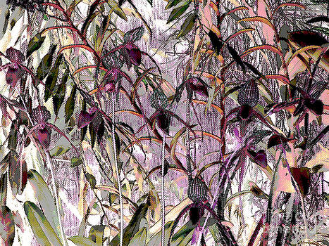Orchid Dreams by Ann Johndro-Collins