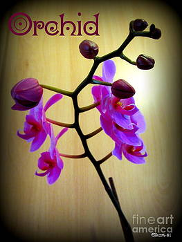 Orchid by Gra Howard