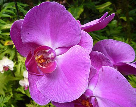 Orchid II by Mark L Watson