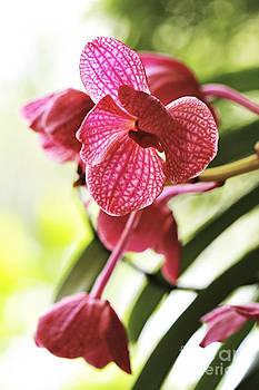 Orchid II by Pamela Gail Torres