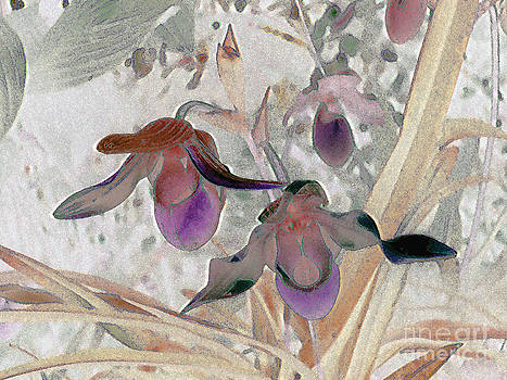 Orchid Light by Ann Johndro-Collins