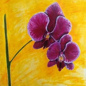 Orchid by Mary King