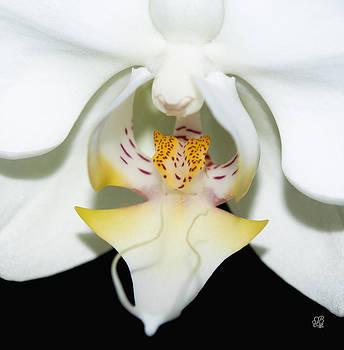 Orchid Splendor by Barbara Middleton